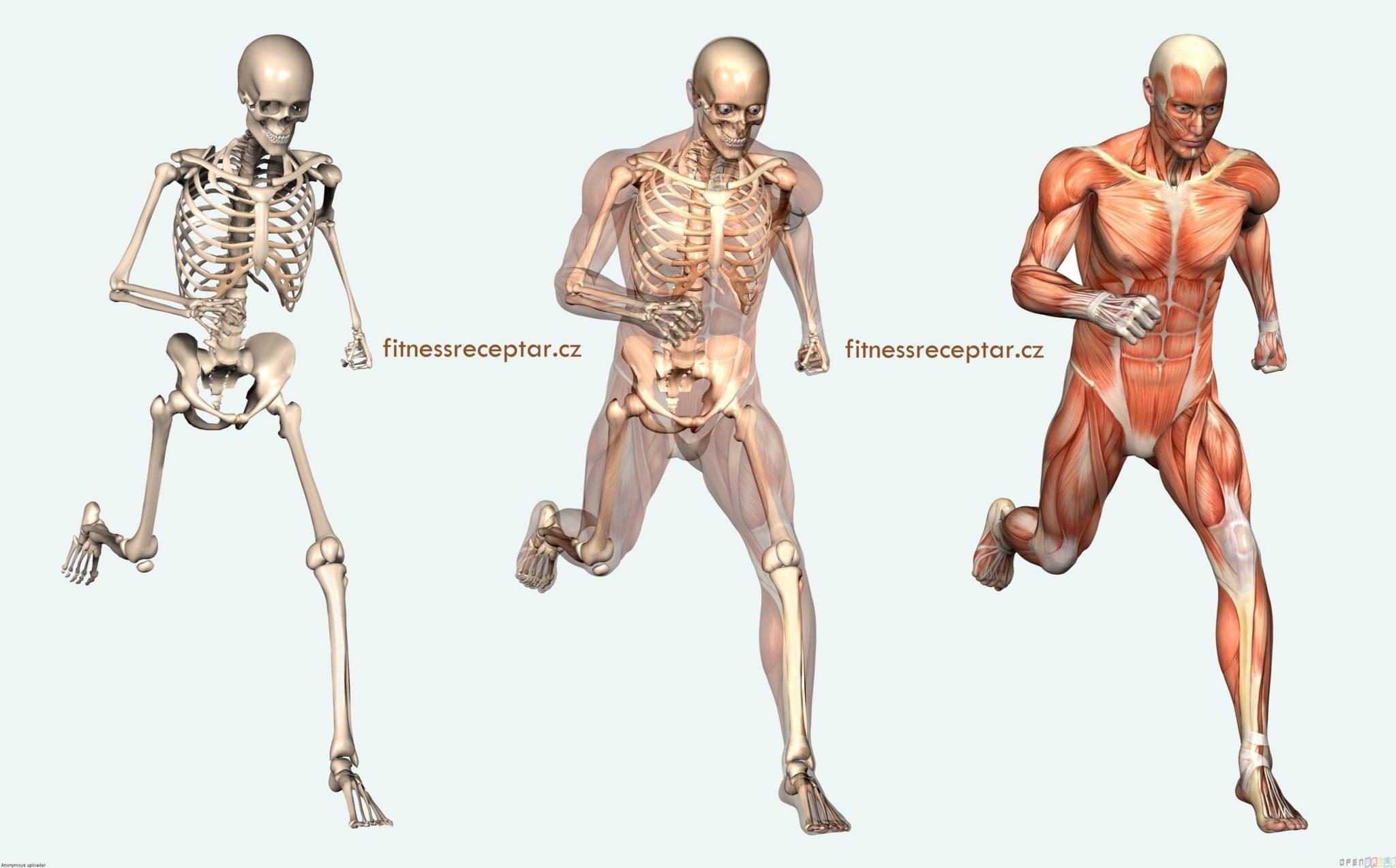 human_body_3677x2285