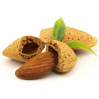 Almond with leaf